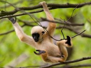 eerste mens uitje apenheul