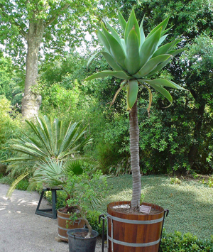 grieken en romeinen tuin hortus botanicus